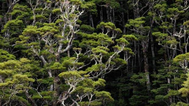 Tree-air_9d043dae-a0a0-4c09-9148-261ed133b43e_grande.jpg
