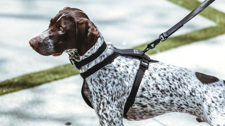 Killspencer brings its leather goods to our canine friends
